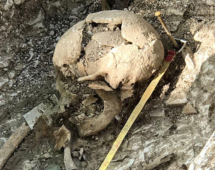 A skull excavated at Barrow Clump in Salisbury Plain.