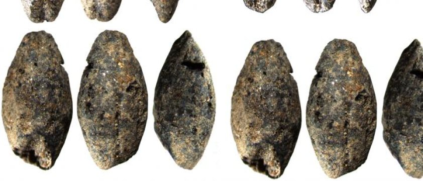 Researchers determined the age of millennia-old barley grains using radiocarbon dating.