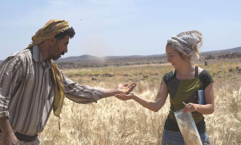 Dr. Amaia Arranz-Otaegui and Ali Shakaiteer sampling cereals in the Shubayqa area.