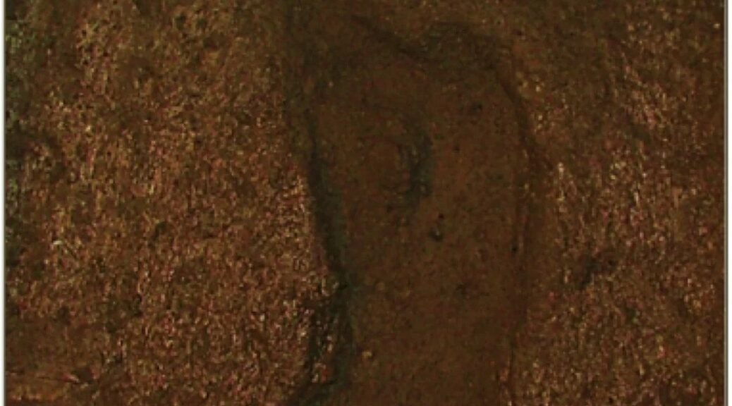 Earliest Ever Human Footprint in the Americas Discovered, Dating Back 15,600 Years