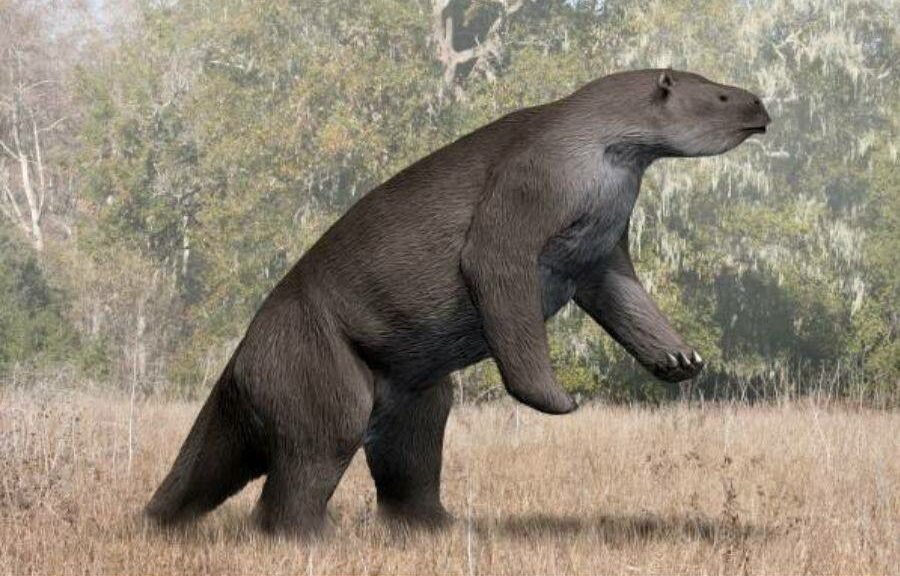 Meet The Megatherium: The Adorable 13-Foot Sloth That Ruled The Prehistoric Amazon